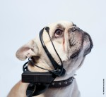 No More Woof – hear your dog's words and thoughts